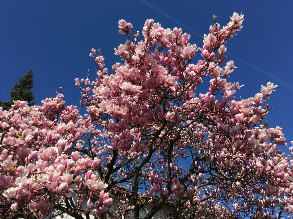 Springtime @Skilja in Freiburg